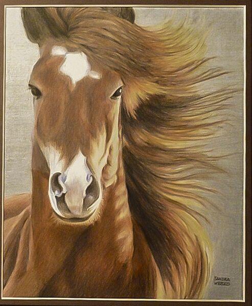 sandra-weeks-horse
