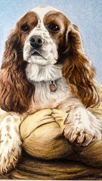 sandra-weeks-long-eared-dog