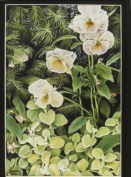 sandra-weeks-plants