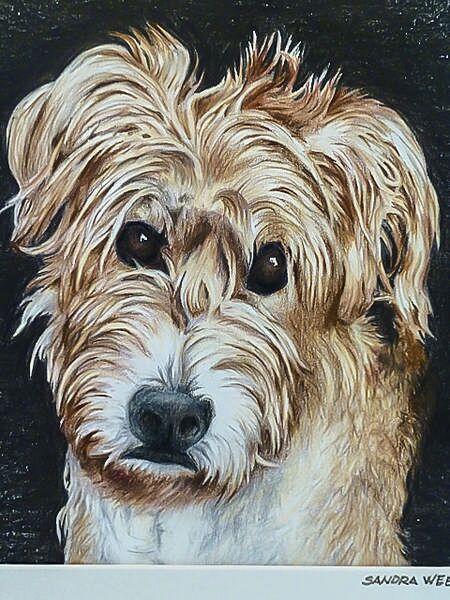 sandra-weeks-shaggy-dog