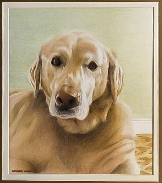 sandra-weeks-tan-dog